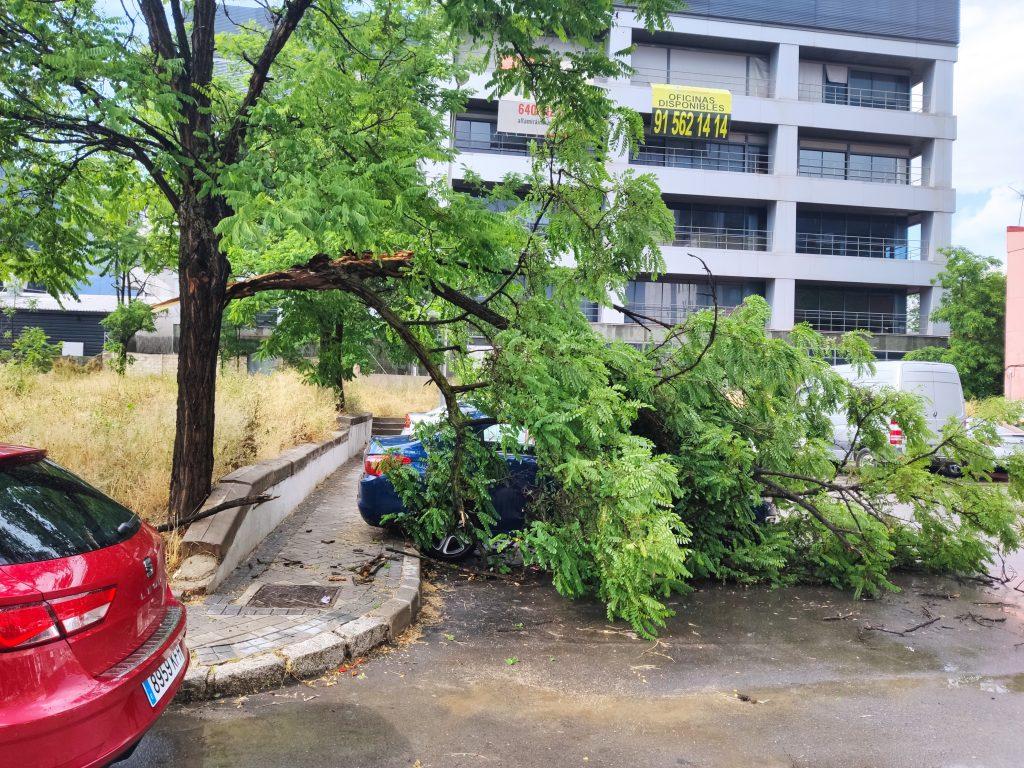 Rama caída en la calle Garganchón