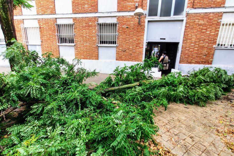 Rama caída frente al bloque 123 de la calle Pradoluengo